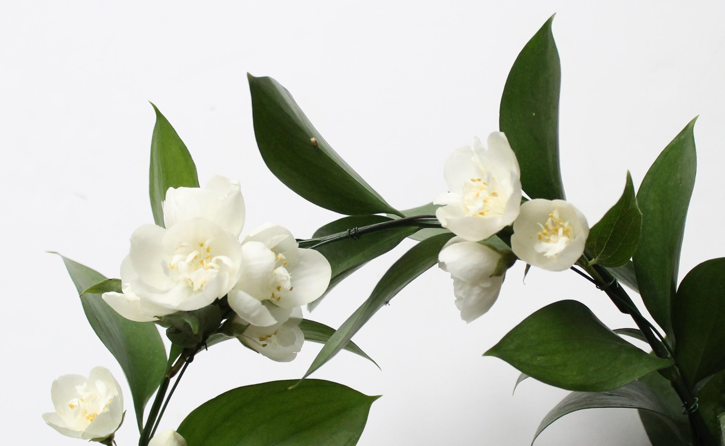 couronne-de-fleurs-jasmin-1