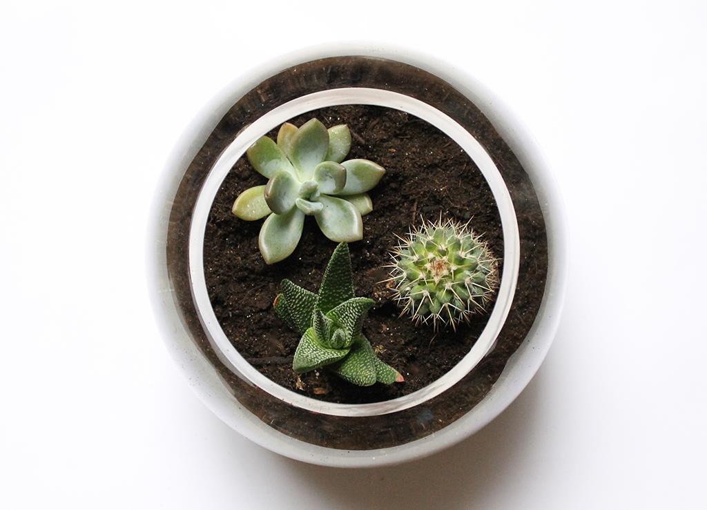 terrarium-cactus