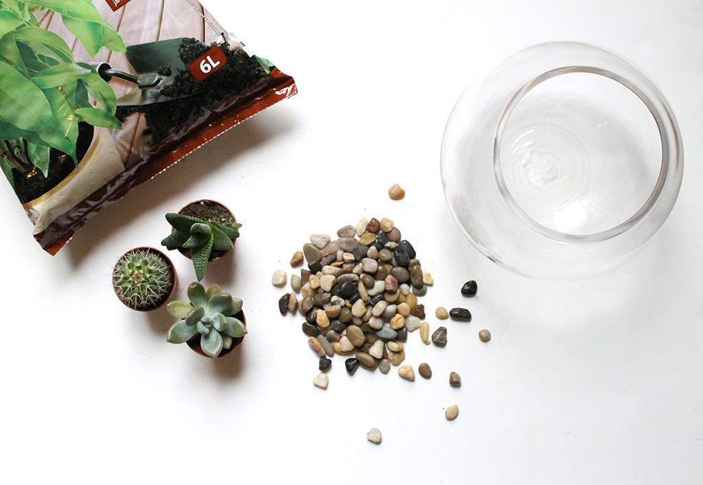 diy terrarium de cactus the miscellanista. Black Bedroom Furniture Sets. Home Design Ideas