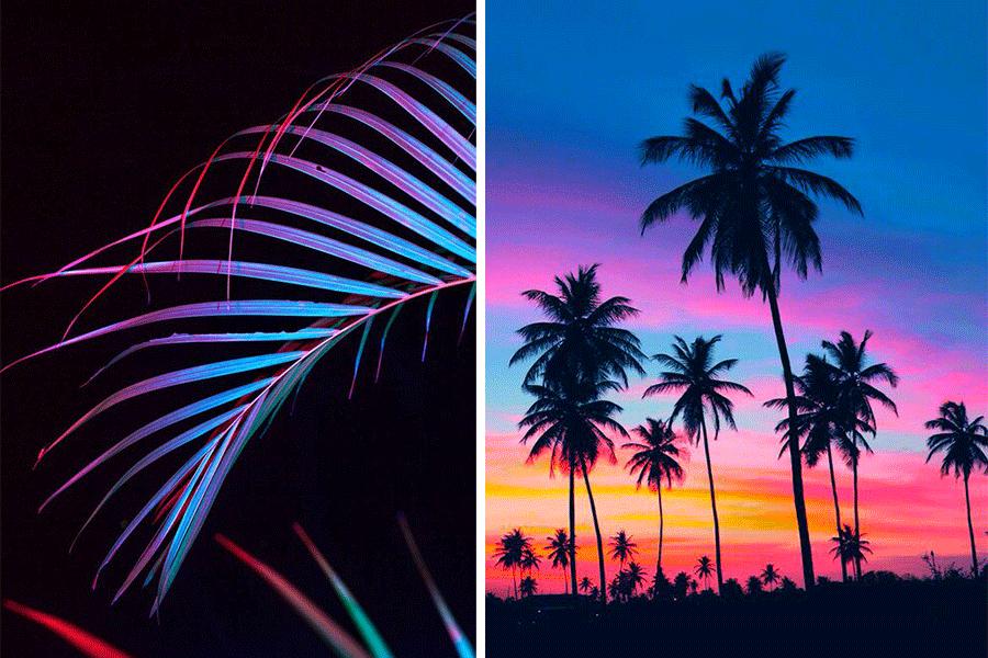 palmiers-couleurs-neon