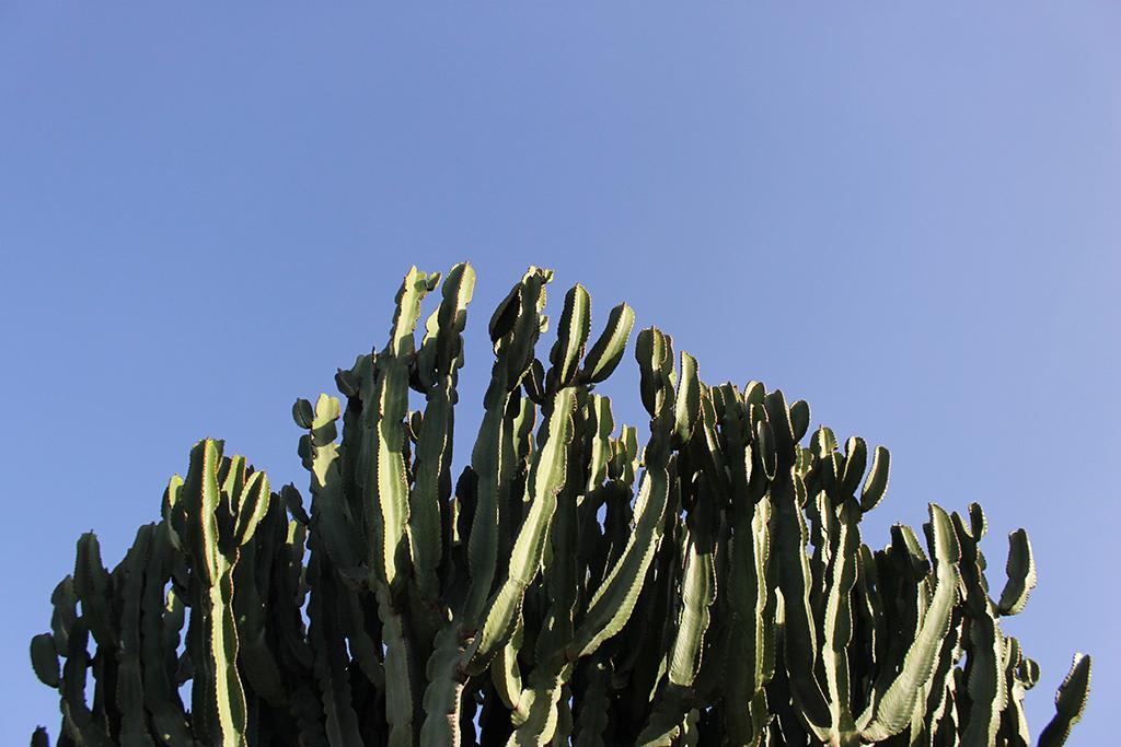 cactus-puerto-del-carmen