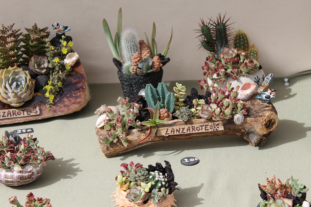 mini-cactus-teguise