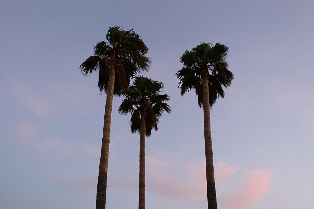 palmiers-puerto-del-carmen