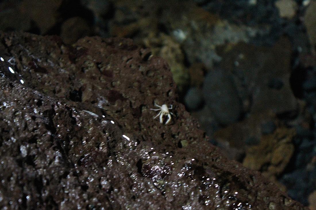 crabes-blancs-jameos-del-agua