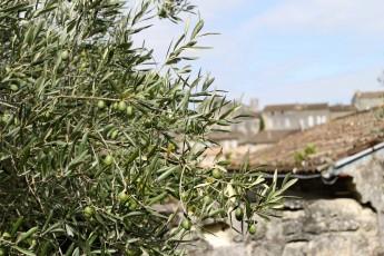 olivier-saint-emilion