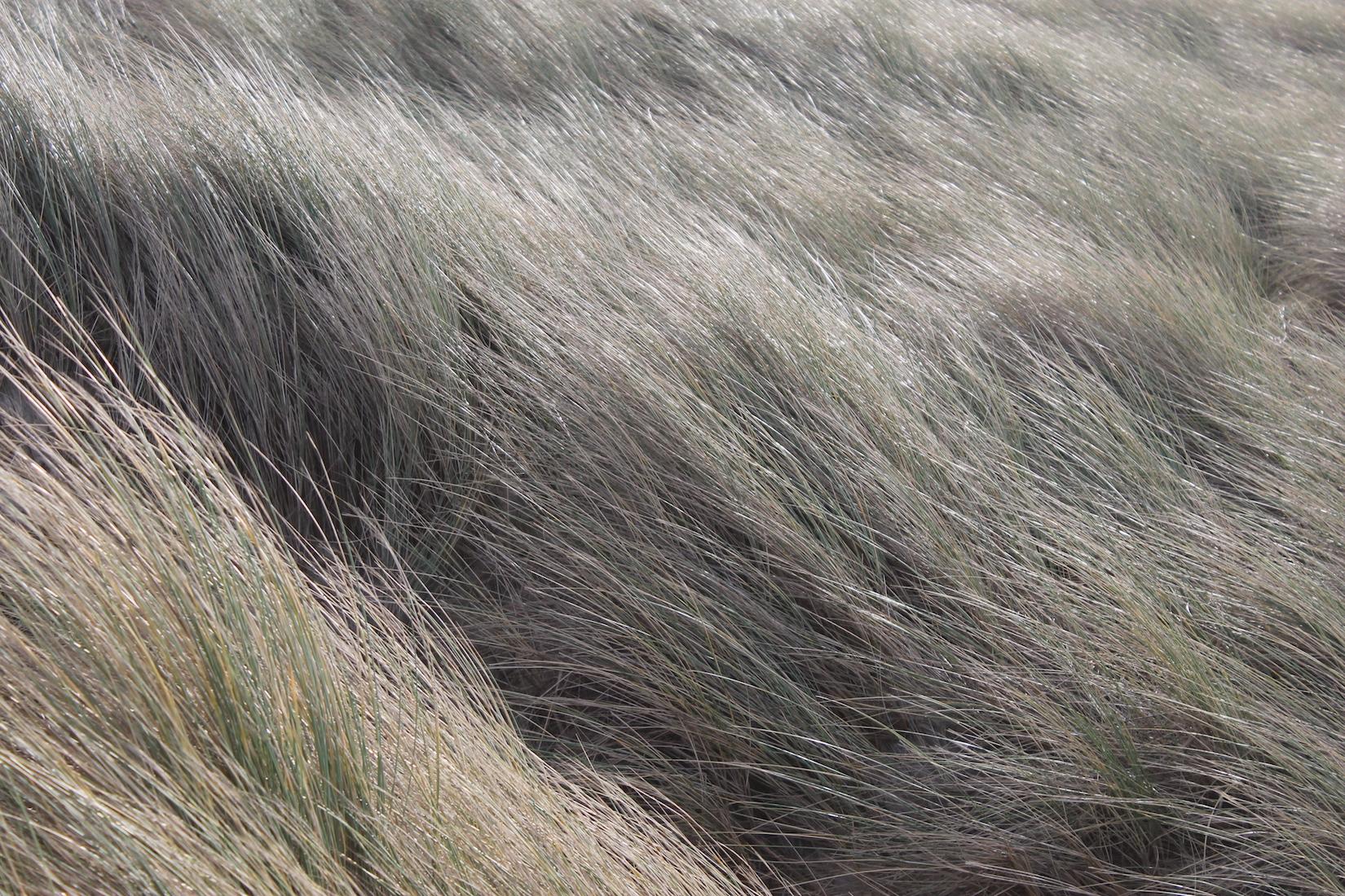dunes-touquet